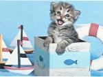 Tabby kitten in marine themed box