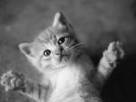 A hug for me? :D