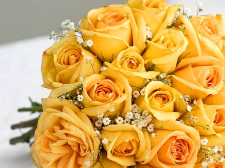 Spring gold , Yellow Roses Wallpapers and Images , Desktop