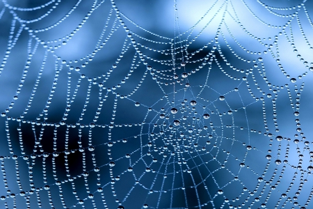 Morning dew on a web - water, net, web, dew, morning, drops, blue