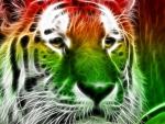 Tigris Of Colours
