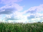 Summer sky over the cattails