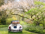 Travel in spring