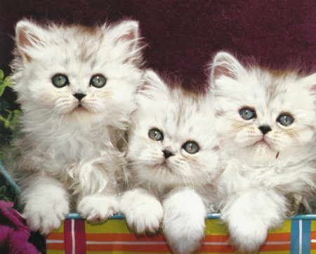 Three kittens - kittens, cute, paws, siblings