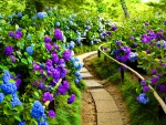 Path among flowers