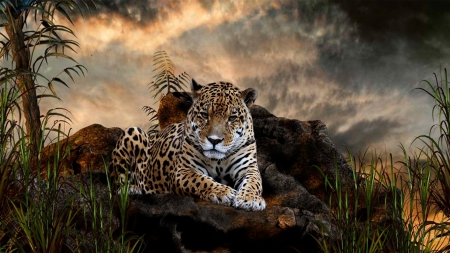 Leopard - beautiful, Leopard, Cats, Animals