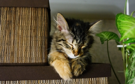 Sleeping Cat - cute, sleeping, Animals, Cat