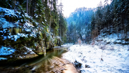 amazing forest stream in winter - forest, stream, icicles, winter, mist