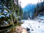 amazing forest stream in winter