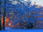 tree and bush on sunset fire in winter