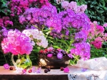 Beautiful  flowers in garden