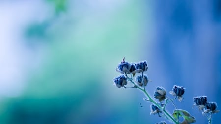 Small Rare Flowers - flowers, rare, small, spring, delicate, nature