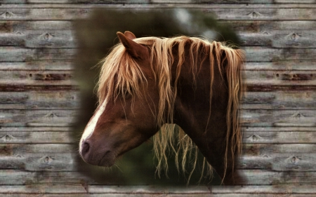 Close Up Head Shot - Horse 2 - photo, draft, photography, wide screen, equine, horse, animal