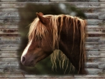 Close Up Head Shot - Horse 2