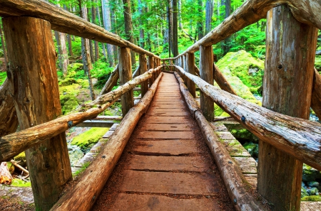 Boardwalk in forest - wooden, bridge, nice, walk, summer, trees, nature, forest, beautiful, lovely, river, boardwalk