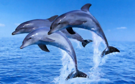 Dolphins - BEAUTY, NATURE, WALLPAPER, DOLPHINS