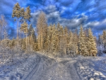 a fork in the road at a forest in winter hdr