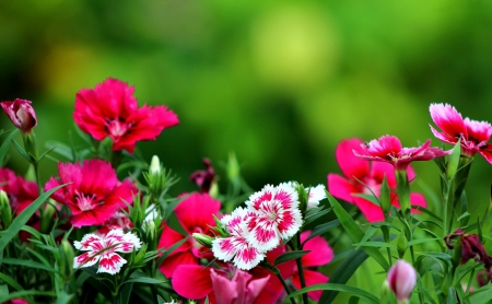 Dark Pink Flowers Flowers Nature Background Wallpapers On