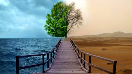 ocean vs desert - fusion, photography, dry tree, bridge, deserts, ocean, nature, trees