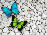 Butterflies on pebble
