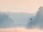 bird flying over a foggy river