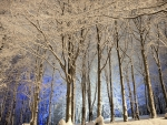 blue light within a white winter forest