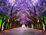 Purple Alley