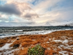 rugged wild seashore in winter