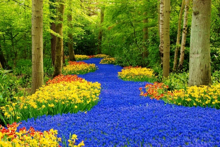 Flowers In Keukenhof Garden Flowers Nature Background Wallpapers