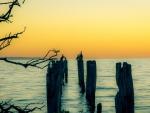 Cormorants sitting on wooden pylons