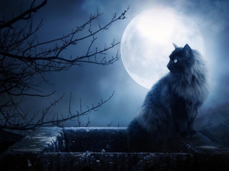 Black cat - moonlight, tree, cat, dark
