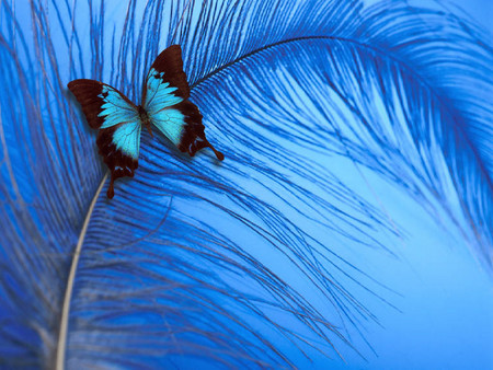 blue butterfly and feather - bugs, nature, butterflys, abstract, blue