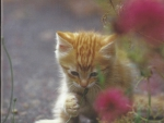 A kitten playing with a weed