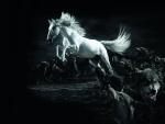 caballo blanco y lobos