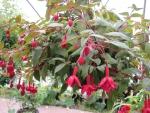 Flowers garden in greenhouse 29