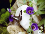 Butterflys and Purple Flowers