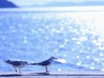 Gulls on the beach