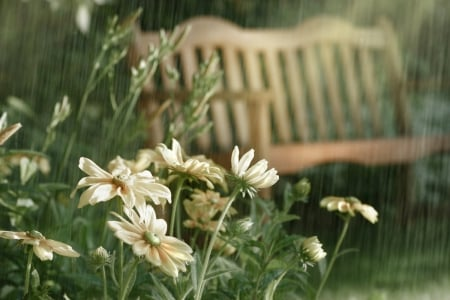 THE WAITING PLACE - pretty, relax, sunlight, yellow, daisies, sunrays, parks, sunflowers, benches, landscapes, greens, sunshine