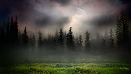 Sunrise in Foggy Woods - forest, foggy, grass, trees, sky, clouds, fog, mist, misty, sunrise, field