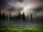 Sunrise in Foggy Woods