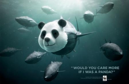 Help Save Blue Fin Tuna - Fish