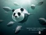 Help Save Blue Fin Tuna