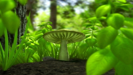 Trippy Mushroom Fields Nature Background Wallpapers On