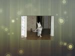Graceful Dancing Cat