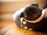 SLEEPING IN A SHOE