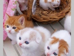cute kitty babies in the basket