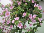 Flowers garden in greenhouse 94