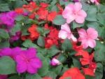 Flowers garden in greenhouse 96