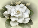 Embellished Gardenia 1