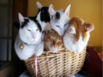Basket of furrr
